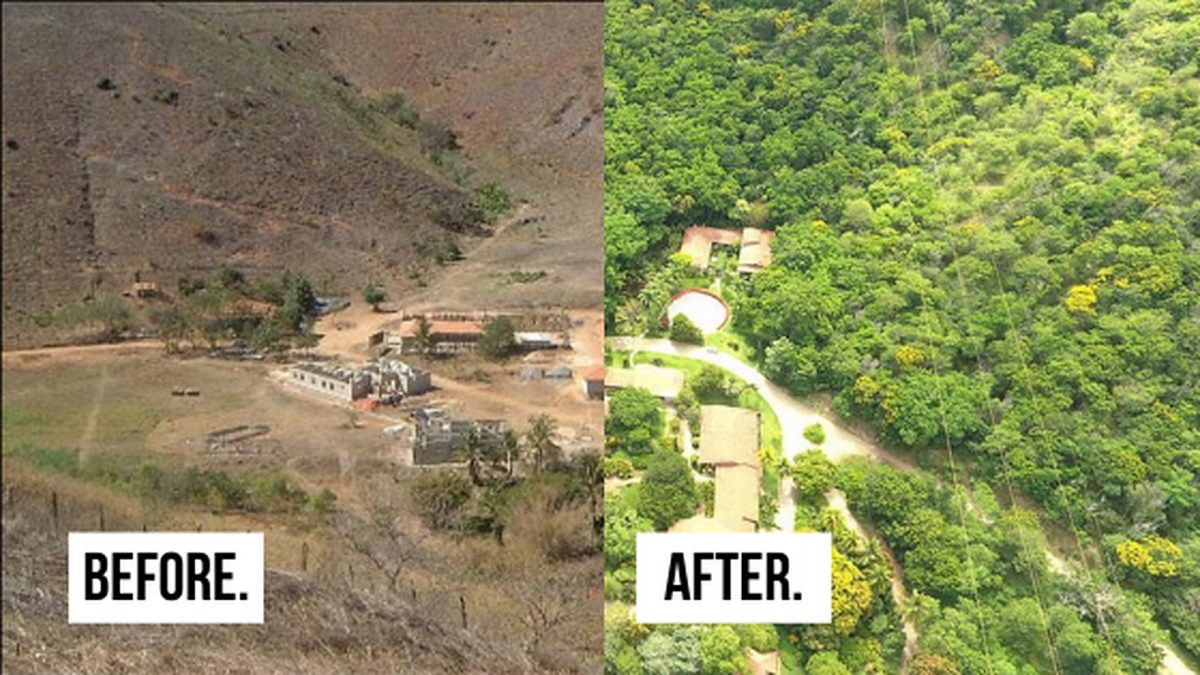 Team Rebuilds Entire Forest In 20 Years.