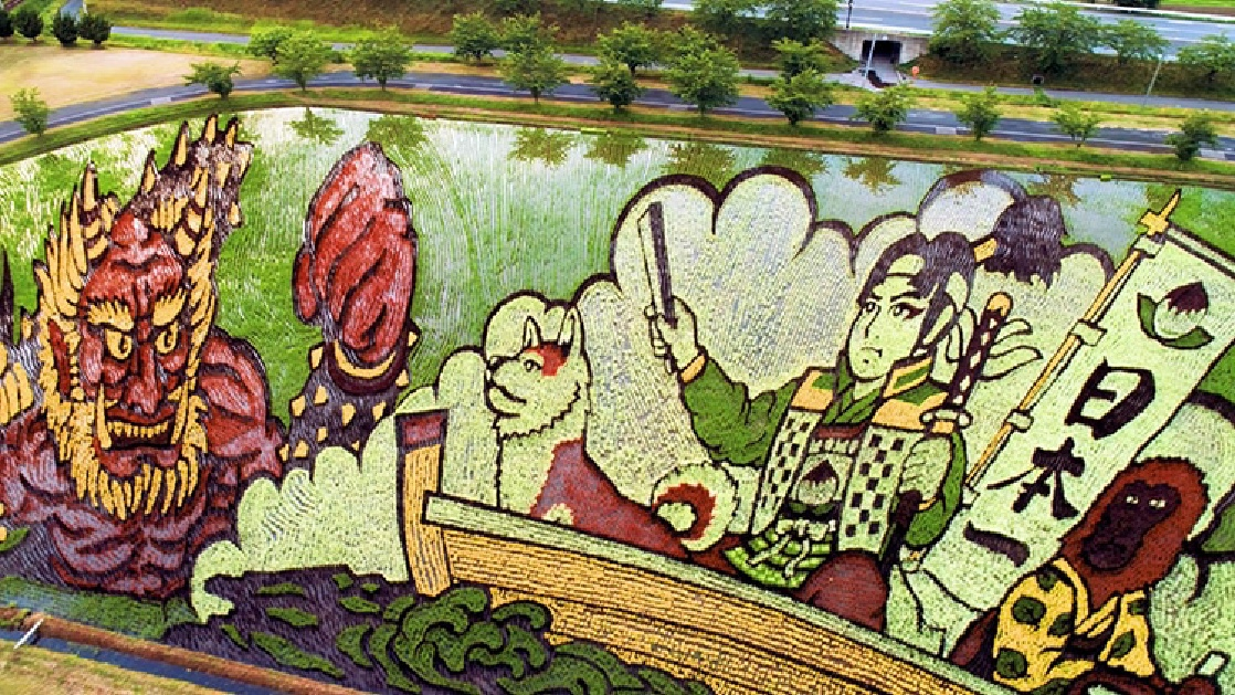 Japanese Village Plants Colored Rice To Make Pictures.
