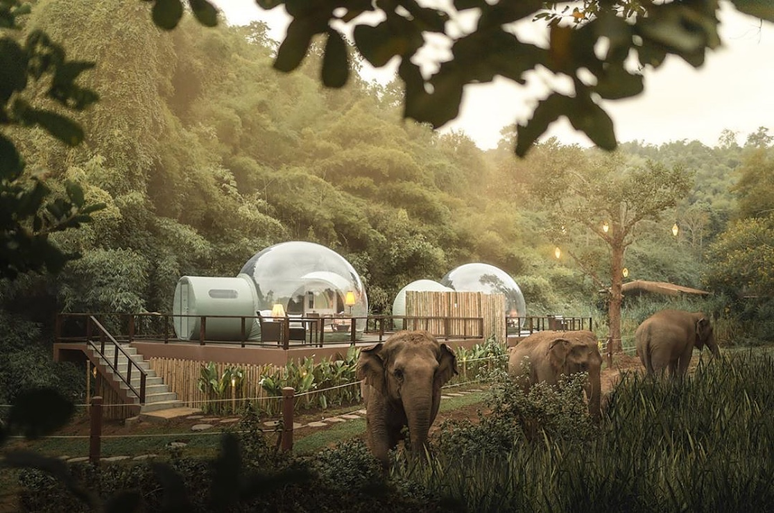 Sleep In See-Through Bubble With Elephants.