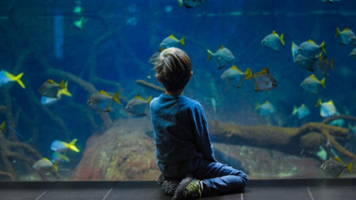 Vancouver Aquarium Might Be Shut Down For Good.